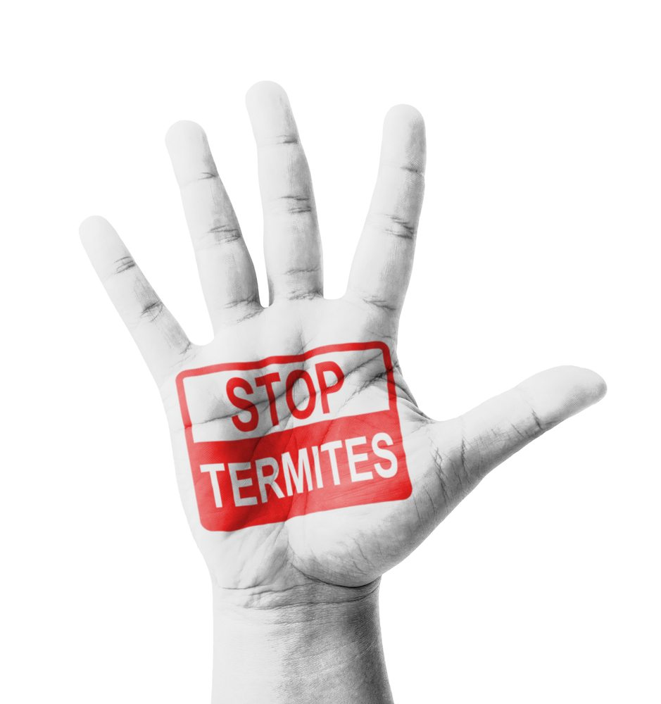 "Opened hand painted white with words in red ""stop termites"""
