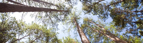 What Is Forest Friendly Timber?