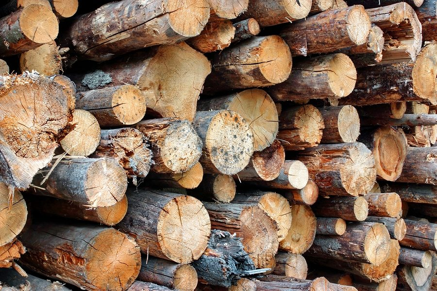 Woodpile of cut harvested forest wood