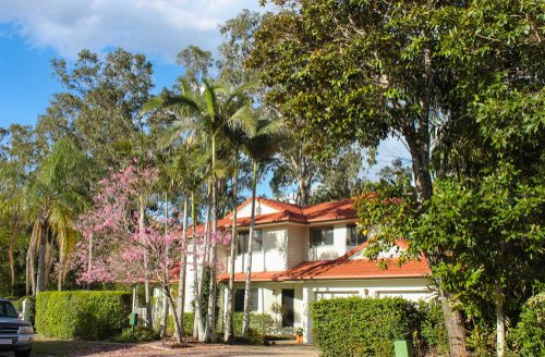 Upscale Australian white house with flowering gums and bushland surrounds.